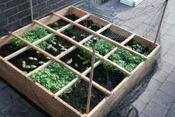 Vierkante Meter Tuin : Vierkantemetertuin