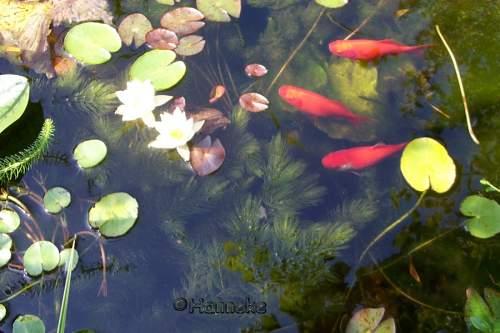 Vissen for Vissen vijver